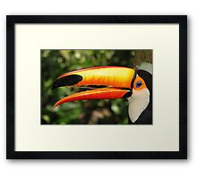 Portrait of a Toco Toucan at Iguassu, Brazil  Framed Print