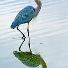 Blue Heron by Eyal Nahmias