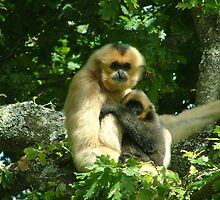 Gibbon and baby by MisterD