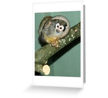 Curled in a Ball! Greeting Card