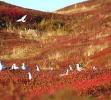 The Birds by Tim Yuan