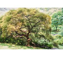 Twisty Tree Photographic Print