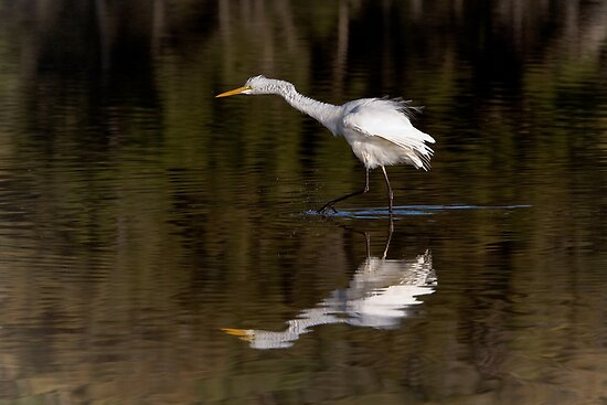 Great Egret ~ Scruffy  by Robert Elliott