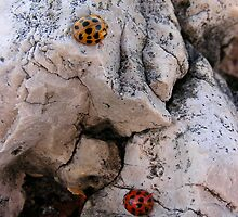 Ladybugs by LinaFrancisco