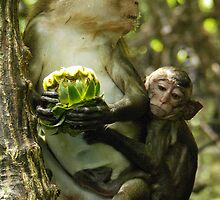 Long Tailed Macaque. by salsbells69