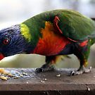 Lorikeets at Mt Tamborine Qld by Julie Just