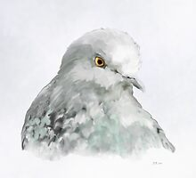 Pigeon by Bamalam Art and Photography