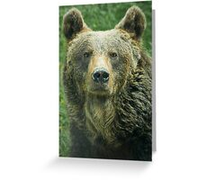Eurasian Brown Bear Greeting Card