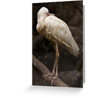 Platalea Alba Greeting Card