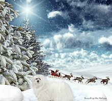 Snowdrop the Maltese - Sleigh Bells Ringing ! by Morag Bates