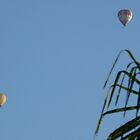 Early morning ballooning in the Yarra Valley by lols