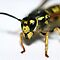 Wasp are you looking at?? by Martin Hampson