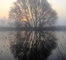 A Pond Reflection by Wrayzo