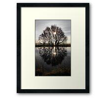 Tree Highlights Framed Print
