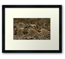 Rattleless Rattlesnake! Framed Print
