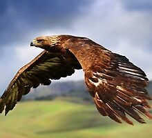 Eagle by ArtItaly