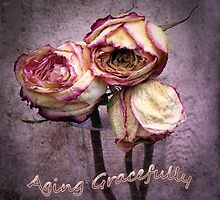 Aging Gracefully by CarolM