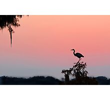Great Blue Heron Silhouette at Sunset Photographic Print