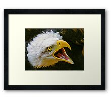 Bald Eagle Scream Framed Print