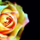 rosey by VanessaHall