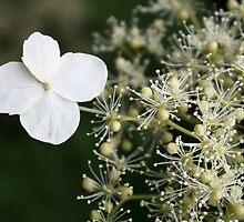 Fabulous flora by MimHarper