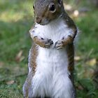Square up squirel by Mark Baldwyn