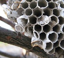 Wasp Nest by coleen gudbranson