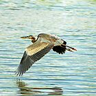 Heron Today Gone Tomorrow by Stephen Forbes
