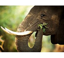 Elephant Brunch Photographic Print