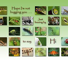 Hope I'm not bugging you . . . by Bonnie T.  Barry