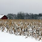 Thanksgiving Snow by Chris Coates
