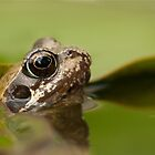 Summertime Frog by Rhys Herbert