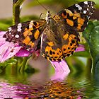 Painted Lady - Butterfly by Yannik Hay