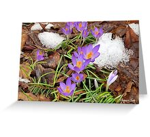 Spring ~ We Wish You Had Meant It Greeting Card