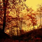 Autumn by MEV Photographs