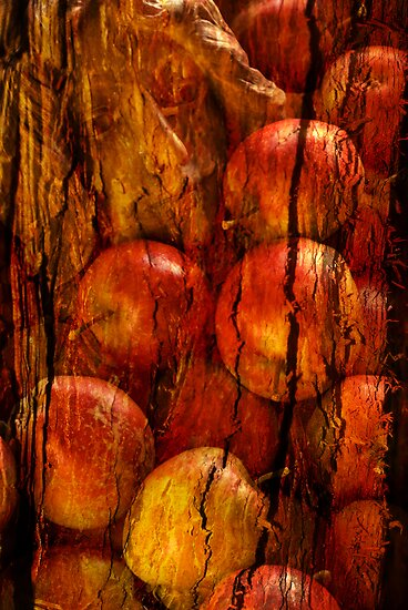 Apple tree by Per E. Gunnarsen
