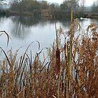 Bullrushes around the Lake, Devon UK by lynn carter