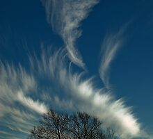 Cirrus Clouds in a Winter Sky by EricHands