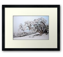 Snowbound Snowgum, Mt Feathertop, Australia Framed Print