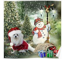 Snowdrop the Maltese - Counting the Days ! Poster