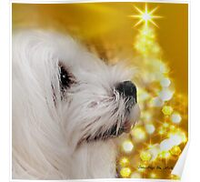 Snowdrop the Maltese - Joy to the World ! Poster