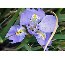Iris wears her Blue Gown ...... Photographic Print