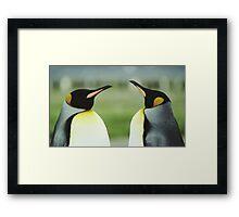 King Penguins Framed Print