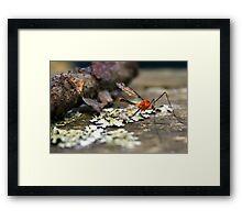 Hey, that's my blood! Give it back! Framed Print