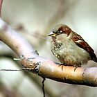 Little Brown Bird by Robert Daveant