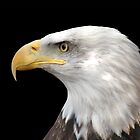 American Eagle by Robert Daveant