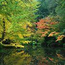 Autumn Splendor by Robert Mullner