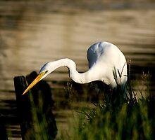 Fishing by Jonicool
