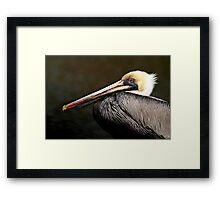Brown Pelican Framed Print