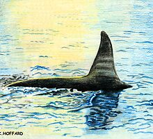 Killer Whale by Hoffard